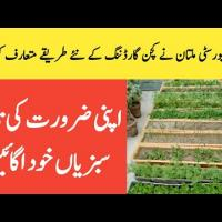 MNS-University of Agriculture Multan Initiatives for Promotion of Kitchen/Rooftop Gardening |